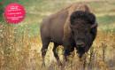 Dieppe et Safari Bison - Dimanche 2 Août 2020