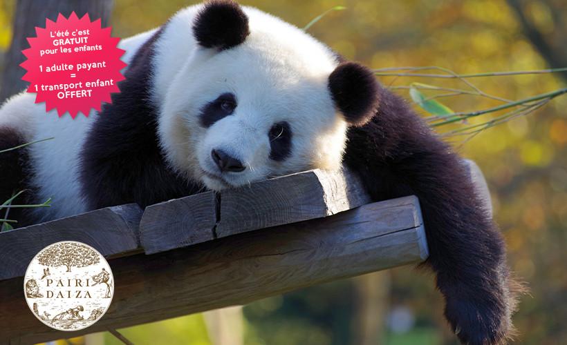 Par Pairi Daiza et ses pandas - Dimanche 30 Août 2020