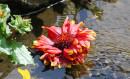 Week-End Floralies de Nantes